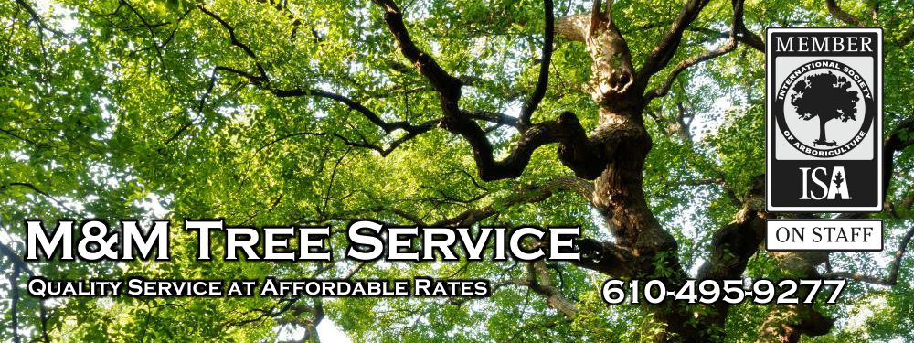M&M Tree Service | Complete tree service at affordable rates